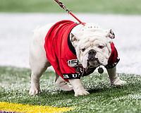 ATLANTA, GA - DECEMBER 7: Uga X mascot of the University of Georgia during a game between Georgia Bulldogs and LSU Tigers at Mercedes Benz Stadium on December 7, 2019 in Atlanta, Georgia.