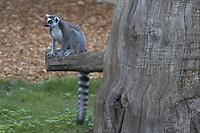 Bioparco di Roma<br /> Il Giardino Zoologico di Roma, fondato nel 1908, fu inaugurato il 5 gennaio 1911. <br /> Biopark of Rome<br /> The Zoological Garden of Rome, founded in 1908, was inaugurated on January 5, 1911