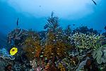 Butterfly Reef