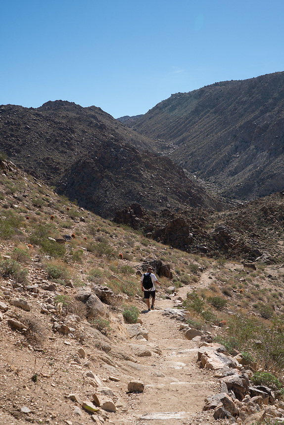 Hiker on Fortynine Palms Oasis Trail, Joshua Tree National Park, California, US