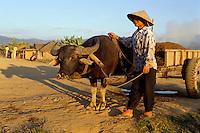 Büffelwagen in Dien Bien Phu, Vietnam