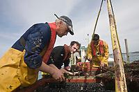 Europe/France/Bretagne/29/Finistère/Plouguernau: Sylvain Huchette de France Haliotis éléve ses ormeaux en pleine mer- le nourissage des ormeaux avec des Algues