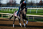 November 3, 2020: Madone, trained by trainer Simon Callaghan, exercises in preparation for the Breeders' Cup Juvenile Fillies Turf at Keeneland Racetrack in Lexington, Kentucky on November 3, 2020. Jon Durr/Eclipse Sportswire/Breeders Cup