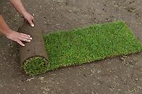 DEUTSCHLAND, Matthies Landwirtschaft in Wenzendorf, Anbau und Ernte von Rollrasen fuer Gaerten, Stadien, Sportstaetten, Parks etc. / <br /> GERMANY cultivation of rolling lawn at Matthies Agriculture in Wenzendorf, lower saxonia