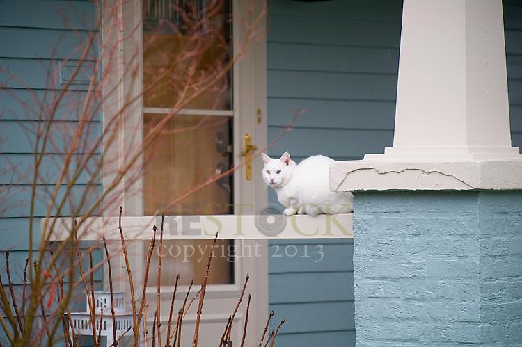 White Cat, Blue House