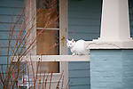 White Cat, Blue House