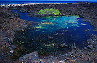 A fresh water anchialine pond off the South Kohala coast, Big Island