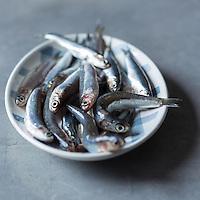 Gastronomie: Anchois de Méditerranée // Gastronomy: Mediterranean anchovies - Stylisme : Valérie LHOMME