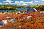 Autumn colors the blueberry fields in Blue Hill, ME