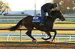 Gypsy King, trained by trainer Wesley A. Ward, exercises in preparation for the Breeders' Cup Juvenile Turf at Keeneland Racetrack in Lexington, Kentucky on October 31, 2020.