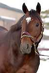 17 January 2010.   Kentucky Stallion Farms. Any Given Saturday being shown at Darley @ Jonabell farm.