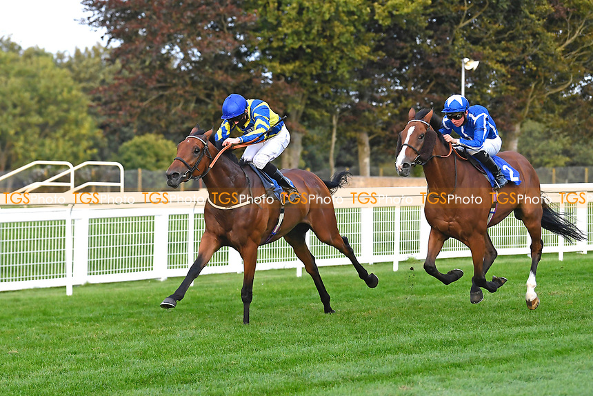 Winner of The Persian Punch Conditions Stakes Trueshan (rails) ridden by Martin Harley and trained by Alan King   during Horse Racing at Salisbury Racecourse on 11th September 2020
