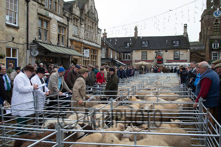 113th Uppingham Christmas Primestock Show held in the Market square.<br />  ©Tim Scrivener Photographer 07850 303986<br />      ....Covering Agriculture In The UK....