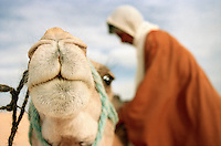 A camel trader loading a camel in the Sahara desert in the south of Tunisia