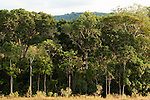 Gallery forest in tropical rainforest and savanna mosaic, Lope National Park, Gabon