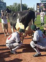 Great Lakes Loons pitchers Jacob Rhame (30) and Ralston Cash (46) milk a cow in the bullpen before a game against the West Michigan Whitecaps on June 5, 2014 at Fifth Third Ballpark in Comstock Park, Michigan.  West Michigan defeated South Bend 6-2.  (Emily Jones/Four Seam Images)