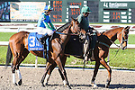 NEW ORLEANS, LA - FEBRUARY 25: December Seven #3, ridden by James Grahm, Mineshaft Handicap race on Risen Star Stakes Day at Fair Grounds Race Course on February 25, 2017 in New Orleans, Louisiana. (Photo by Jarrod Monaret/Eclipse Sportswire/Getty Images)