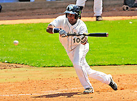 15 July 2010: Vermont Lake Monsters' infielder Hendry Jimenez lays down a bunt against the Aberdeen IronBirds at Centennial Field in Burlington, Vermont. The Lake Monsters rallied in the bottom of the 9th inning to defeat the IronBirds 7-6 notching their league leading 20th win of the 2010 NY Penn League season. Mandatory Credit: Ed Wolfstein Photo