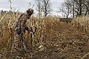 00105-045.10 Bowhunting: Archer wearing Realtree AP is stalking in cornfield.  Camouflage, hunt, deer, sneak, food plot.  H3R1