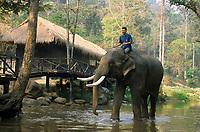Asie/Thaïlande/Env de Chiang Mai : Le bain des éléphants
