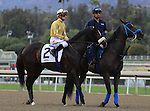 Diamond Bachelor and Julien Leparoux in the post parade before the Grade 2 Robert B. Lewis Stakes at Santa Anita Park in Arcadia, California on February 8, 2014. (Zoe Metz/ Eclipse Sportswire)