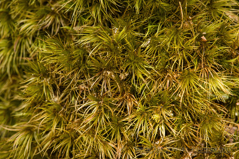 Macro image of moss on a large rock in the woodlands