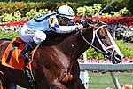 Divine Oath with jockey Javier Castellano on board breaks his maiden at Gulfsteam Park, Hallandale Beach, Florida 01-18-2014