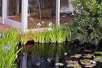 Water garden small pond with waterlilies, iris ensata in blue and white, next to deck and upscale home conservatory house room