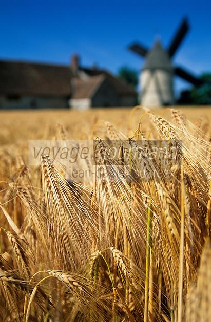 Europe/France/Ile-de-France/77/Seine-et-Marne/Gastins: Le moulin Choix et le champ de céréales