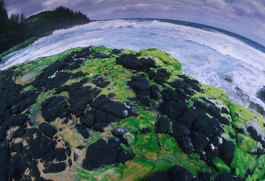 Algae on Lava Rocks at Secret Beach, Kauai, Hawaii, US