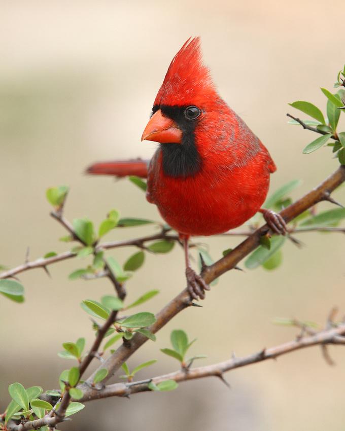 Portrait style close-up of my favorite bird.