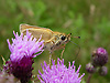 A beautiful small butterfly on a Thistle flower on the South Downs, West Sussex, UK<br />