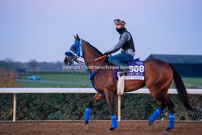 November 5, 2020: Sharp Samurai, trained by trainer Mark Glatt, enters track during morning workouts at Keeneland Racetrack in Lexington, Kentucky on November 5, 2020. Scott Serio/Eclipse Sportswire/Breeders Cup/CSM
