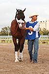 Fort Loudon on his way to the saddling paddock for the Florida Sunshine Millions Classic at Gulfstream Park.  Hallandale Beach Florida. 01-19-2013