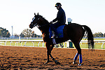 October 21, 2015:  Grand Arch (middle) watchful, as he waits to train on the track for trainer Brian Lynch, in preparation for the Breeder's Cup Turf.  Candice Chavez/ESW/CSM