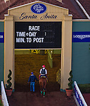 October 28, 2014:  California Chrome, trained by Art Sherman, schools in the paddock in preparation for the Breeders' Cup Classic at Santa Anita Race Course in Arcadia, California on October 28, 2014.John Voorhees/ESW/CSM