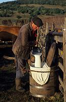 """Europe/France/Auvergne/12/Aveyron/Env. de Laguiole: Aubrac - Traite des vaches pour la préparation de la """"fourme de Laguiole"""" - Détail du lait [Non destiné à un usage publicitaire - Not intended for an advertising use] <br /> PHOTO D'ARCHIVES // ARCHIVAL IMAGES<br /> FRANCE 1980"""