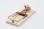 Mouse trap(s).  Generic mouse traps in clean cut, white background.  Wedding Trap, money trap, drug trap, using rings, money, cheese and drugs as bait.
