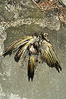 Dead bird<br />
