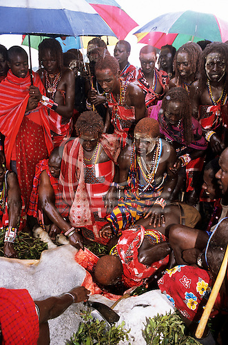 Lolgorian, Kenya. Siria Maasai; Eunoto ceremony; moran drinking the blood of the sacrificed bull.