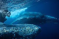 photographer and humpback whale, Megaptera novaeangliae, Kume-jima Is.,Ryukyu Islands, Okinawa, Pacific Ocean