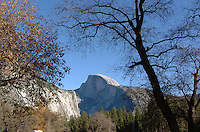 Half Dome is framed by trees Yosemite National Park in California November 23, 2008. Half Dome is perhaps the most recognized symbol of Yosemite. Rising nearly 5,000 feet above the Valley floor, it is one of the most sought-after landmarks in Yosemite. Some people even hike or rock climb to the top! Half Dome can be seen throughout eastern Yosemite Valley and from Glacier Point.(Photo Copyright Alan Greth)