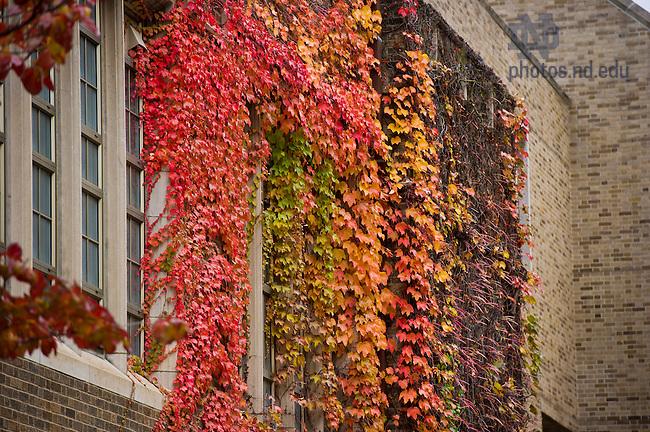 Nov. 5, 2013; Ivy on Fitzpatrick Hall of Engineering<br /> <br /> Photo by Matt Cashore/University of Notre Dame