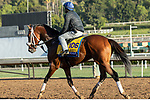 ARCADIA, CA  OCTOBER 30: Breeders' Cup Classic entrant Owendale, trained by Brad Cox,  exercises in preparation for the Breeders' Cup World Championships at Santa Anita Park in Arcadia, California on October 30, 2019.  (Photo by Casey Phillips/Eclipse Sportswire/CSM)