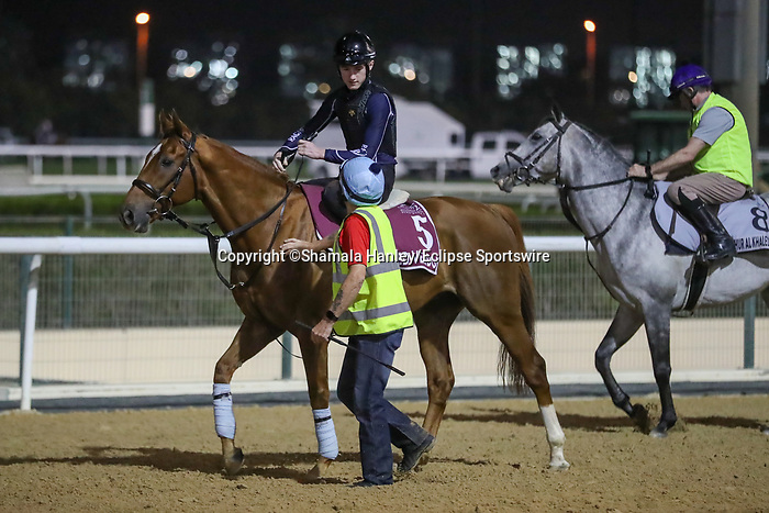 March 25, 2021: Gold Cup contender Red Verdon trains on the track at Meydan Racecourse for trainer Ed Dunlop, Dubai, UAE.<br /> Shamela Hanley/Eclipse Sportswire/CSM