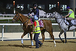 March 25, 2021: Gold Cup contender Red Verdon trains on the track at Meydan Racecourse for trainer Ed Dunlop, Dubai, UAE.<br />