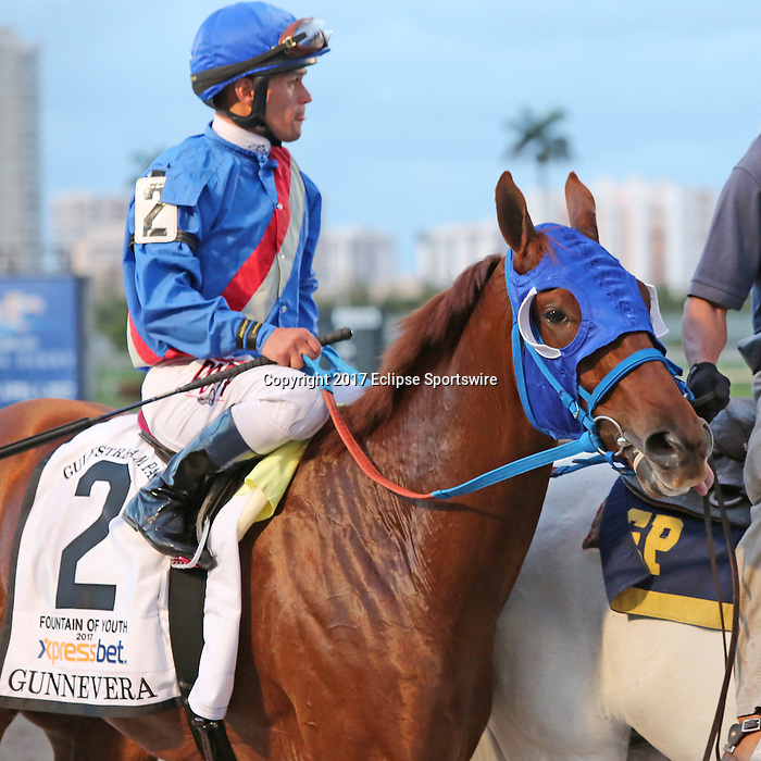 HALLANDALE BEACH, FL - MARCH 04:  Gunnevera (KY) with jockey Javier Castellano up in the post parade of  the $400,000 Xpressbet Fountain Of Youth Stakes (Grade II) at Gulfstream Park on March 04, 2017 in Hallandale Beach, Florida. (Photo by Liz Lamont/Eclipse Sportswire/Getty Images)