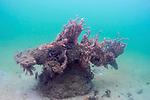 Hammerhead statue , Blue Heron Bridge artificial Reef