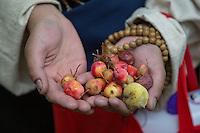Miniature apply harvest at Norbulingka in Lhasa, Tibet