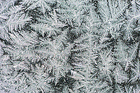 Ice crystals on window, Dinero, Lake Corpus Christi, South Texas, USA